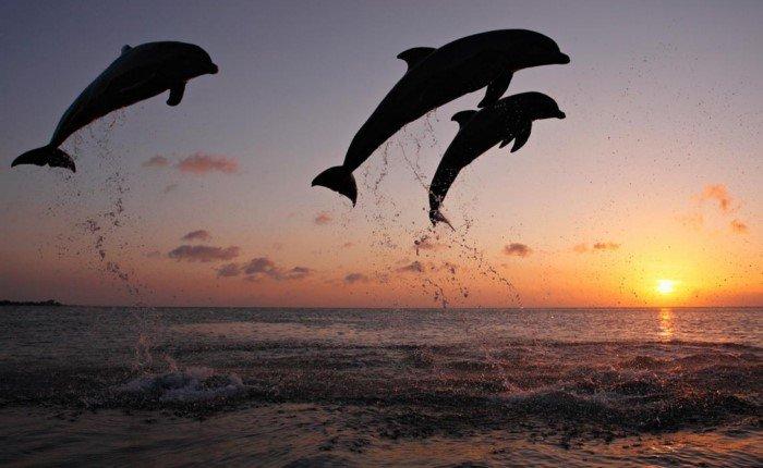 Ужасающие факты про дельфинов
