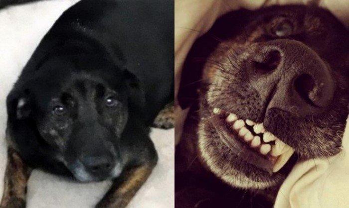 18 фотографий домашних животных до и после того, как они попали в заботливые руки своих хозяев