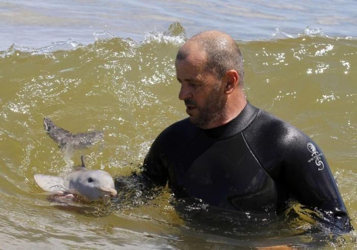 Спасение дельфина - сироты (8 фото)