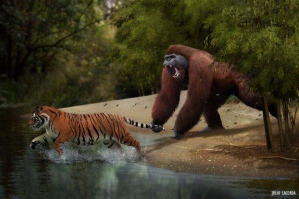 Самая древняя обезьяна